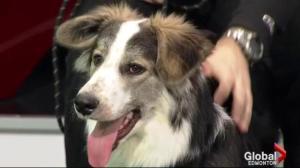Edmonton Humane Society: Velma and Mille