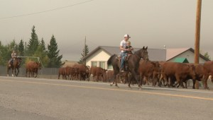 How the Kenow Fire is impacting animals
