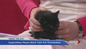 Black cats have tough time finding homes
