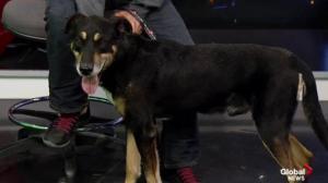 Edmonton Humane Society: Sid & Selma