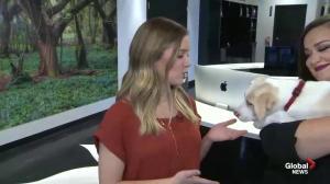 White Lotus Pet Spa Adoption Day