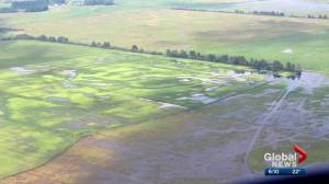 Rain forces Lac Ste. Anne County to declare agricultural disaster