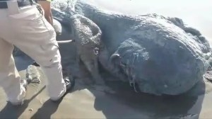 Alleged mystery creature washes up on Mexico beach