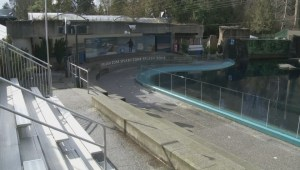 Vancouver Park Board discusses future of cetaceans at Vancouver Aquarium