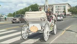 Protesters slam Victoria council for considering horse carriage ban (01:49)