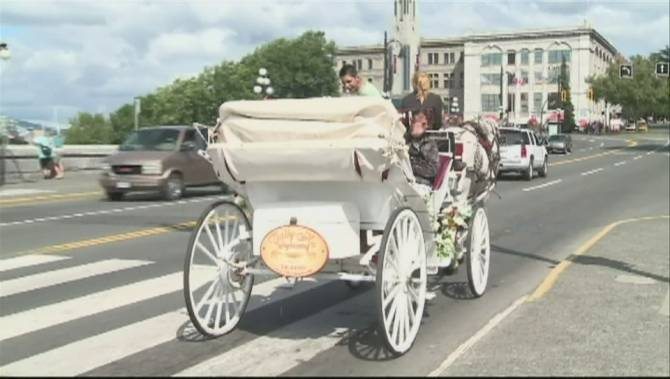 Protesters demand Victoria city council drop proposed ban on horse-drawn carriages