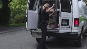 Four women injured in Surrey dog attack (01:19)