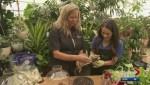 Gardenworks: Tropical Plants