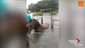 Touching montage shows all the animals that have been saved from Hurricane Harvey
