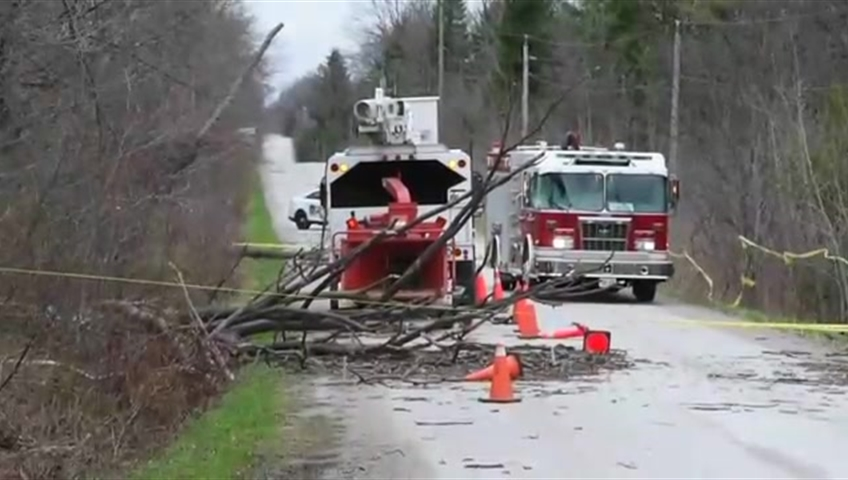 Forestry Worker Killed By Falling Tree During Storm High Winds In Greater Toronto Area Toronto Globalnews Ca