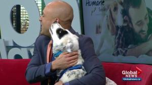 Pet of the Week: Jackie
