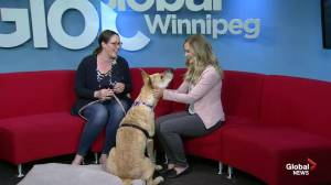 Adopt A Pal: Jenns Furry Friends Rescue