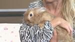Adopt a Pet: Chubbs