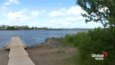 Two dogs die following trip to Fredericton's Carleton Park