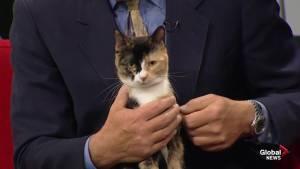 Edmonton Humane Society: Stallone & Reem