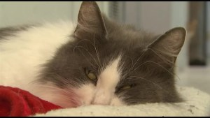 Gananoque Humane Society looking for Help