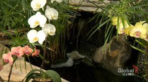 Regina Floral Conservatory eyeing expansion