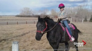 Calgary-area family has warning others after 4 horses mysteriously die
