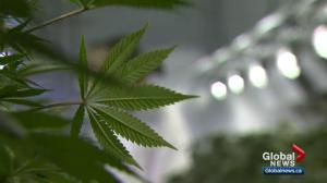 No pot tax money for Winnipeg