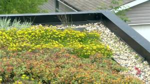 Green roof advocates have 'high hopes' for trend in Saskatchewan