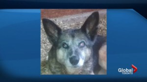 Police investigating officers actions in killing dog in Collingwood