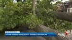 Storm knocks down tree in Yonge, Lawrence neighbourhood