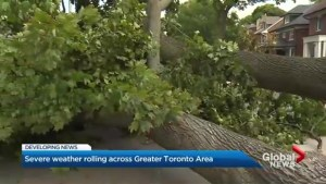 Storm knocks down tree in Yonge, Lawrence neighbourhood