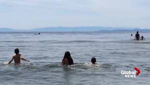 Orcas surprise children playing at B.C. beach