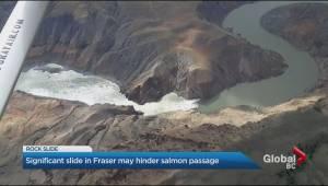 Rockslide in Fraser River raises salmon concerns