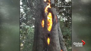 California wildfire mysteriously hallows out glowing tree