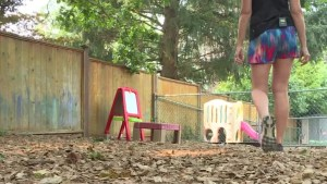 Some daycares blame NDP policy for shutdowns