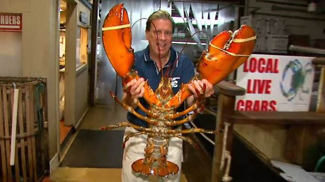 Ultra-Rare 23 Pound Lobster Captured, but You Won't Believe What This Man did to It – Wow Amazing