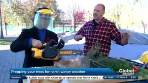 Preparing your trees for winter weather