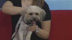 Adopt a Pet: Jasper searching for a home