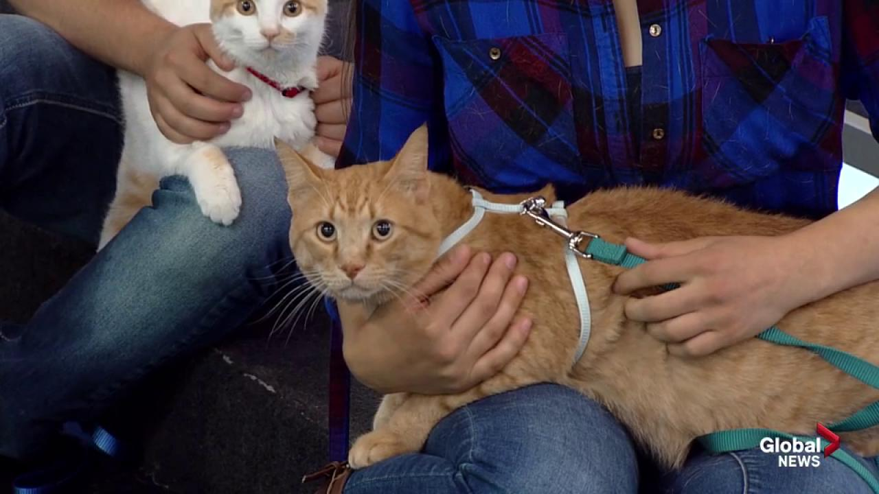 Adopt a Pet with SCARS: Bat Girl, Sully, Cheddar and Maurice the cats