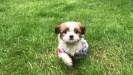 Puppy overdoses on Fentanyl