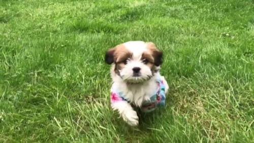 Puppy overdoses on fentanyl watch news videos online for Air canada pet in cabin