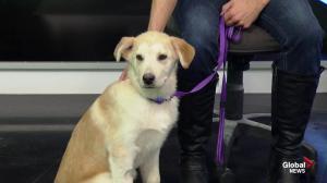 Edmonton Humane Society: Pogo & Lynxy