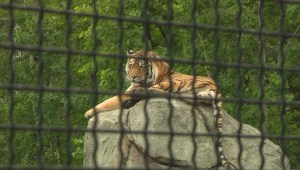 Staff at Winnipeg zoo hope no incidents happen, but say they're ready