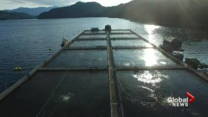 Top chefs take on fish farms
