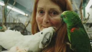 Largest bird relocation in Canadian history