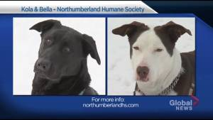 Global Peterborough Shelter Pet Project – Bella and Kola