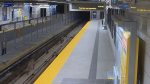 Security camera captures cougars walking on  Port Moody Skytrain tracks