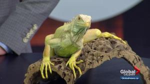 Reptile-themed parties offer local educational opportunities for all ages