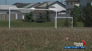 Edmonton to spend more money fighting dandelions