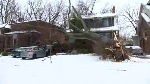 Massive tree snaps, falls on home near Lakeshore and Royal York in Toronto