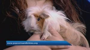 Adopt a Pal: Popcorns & Binkies Rescue Haven