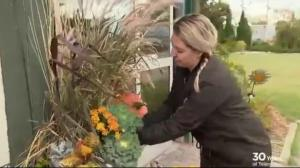 Gardening Tips: freshening up plant containers for fall