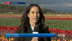 B.C. evening weather forecast: April 12,