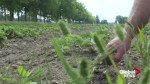 Record heat spells trouble for local farmers